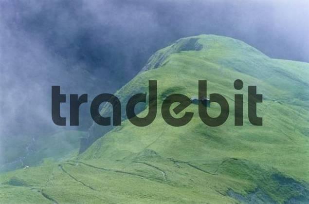 Alpine meadow, Lechtal Alps, Tyrol, Austria, Europe