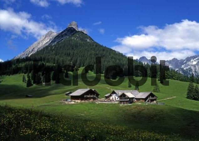 Walder-Alm alpine pasture in front of Mt. Walderkamp-Spitze and Mt. Hundskopf, Karwendel Range, Tyrol, Austria, Europe