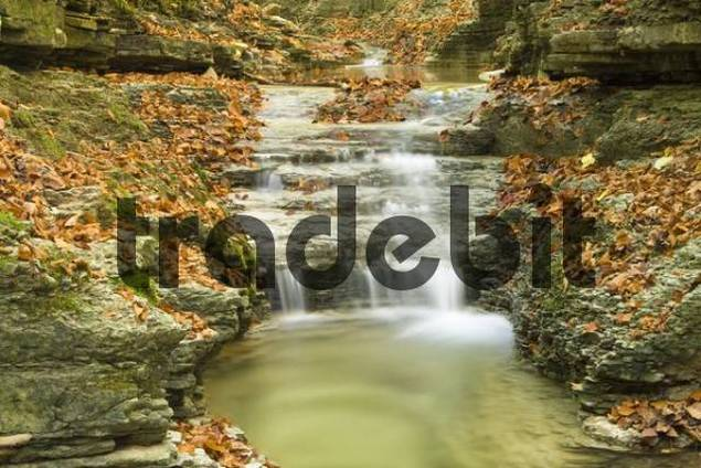 Creek in an autumnal forest, Rautal Valley, Jena, Thuringia, Germany, Europe