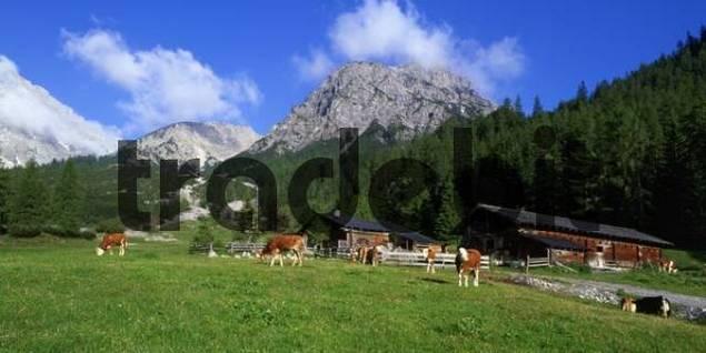 Stallen alpine pasture, Hahnkampl und Rauher Knoell Mountains, Stallen valley, Karwendel Range, Tyrol, Austria, Europe