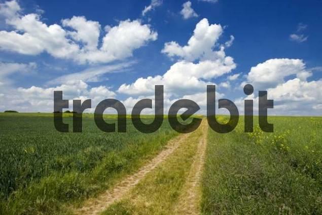 Path, Germany, Europe