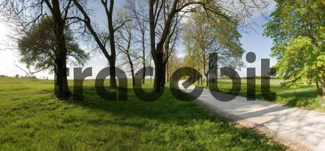 Road in the middle of an avenue of trees and meadows