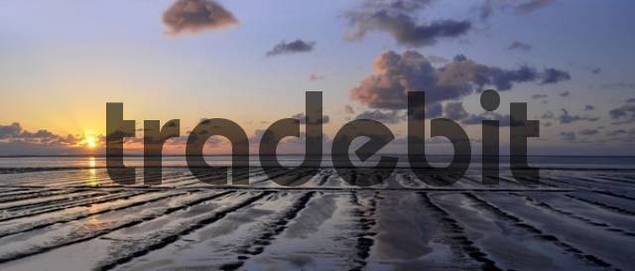 Sunset, wetlands, dusk, Morsum, Sylt, North Frisian Islands, Schleswig Holstein, Germany, Europe