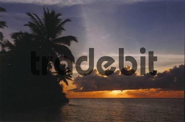 sunrise palm tree