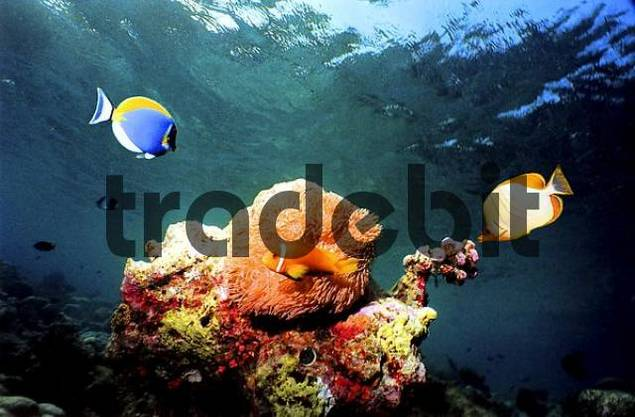 Maledives diving