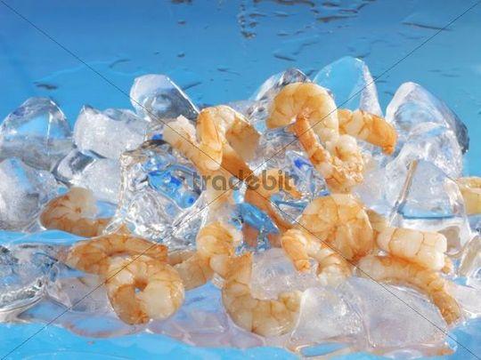 Shrimps on ice