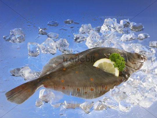European Plaice on ice
