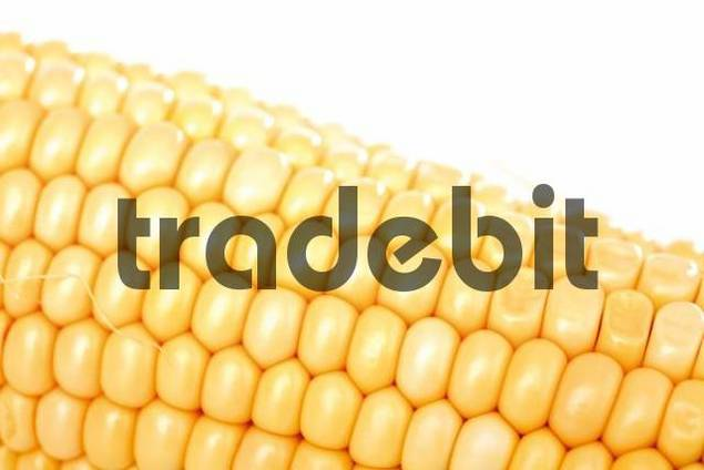 effect of radiation to corn zea The effects of nitrogen on the photosynthetic characteristics of two different stay-green corn (zea mays l) at the grain-filling stage were studied using a stay-green inbred line (q319) and a non-stay-green inbred line.