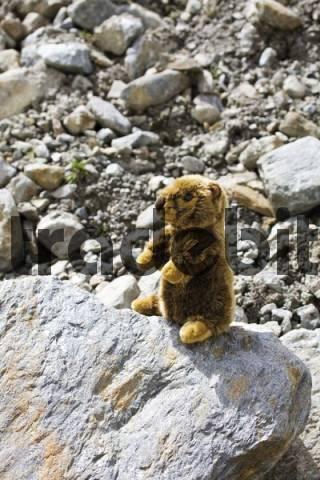 Toy marmot, Kaunertal Valley, Tyrol, Austria, Europe