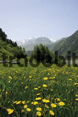 Flower meadow, Kaunertal Valley, Tyrol, Austria, Europe