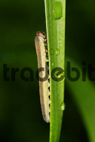 Rob on a blade of grass