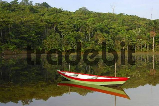 Boat on a jungle river on a calm morning Amazonia Brazil