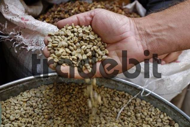 Salesmans hand controlling green coffee beans, Sanaa, Sanaa, UNESCO World Heritage Site, Yemen, Arabia, Arabian Peninsula, Middle East