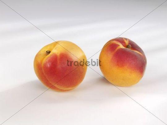 Two Apricots Prunus armeniaca