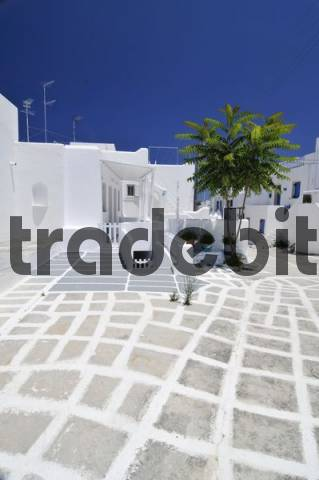 Alley with white painted paving stones and palms in Naoussa, Paros, Cyclades, Greece, Europe