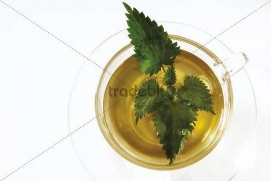 Nettle tea in a tea glass