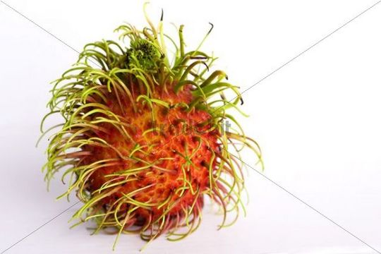 Rambutan Nephelium lappaceum, tropical fruit