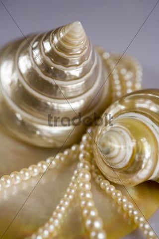 Still life with a pearl necklace and smoothed down and polished sea snail and shell