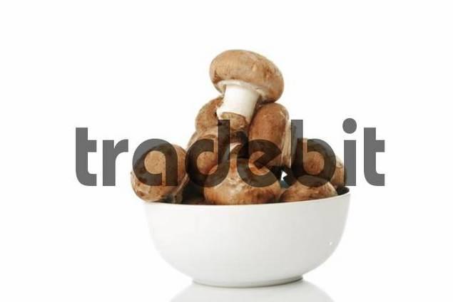 Organic Mushrooms Agaricus