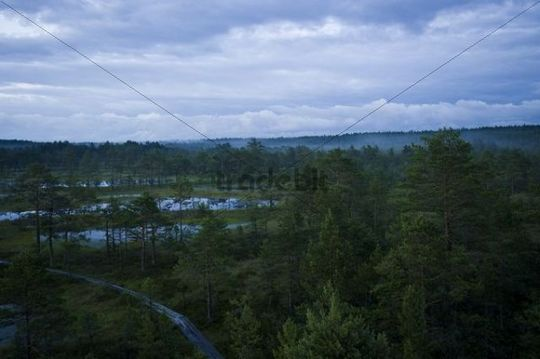 Viru Raba, bog, Lahemaa National park, Estonia, Baltic States, Europe