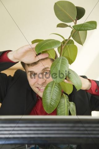 Man at a desk looking out from behind a rubber plant, smiling
