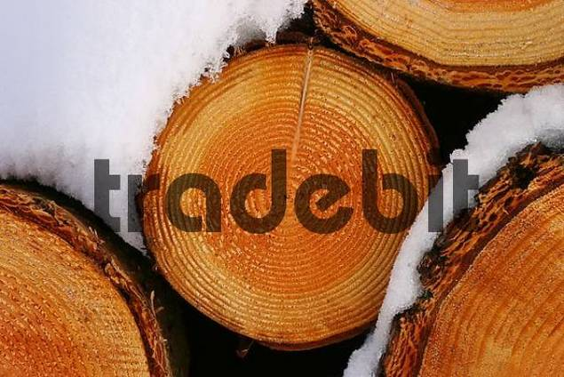 stored wood in the snow winter