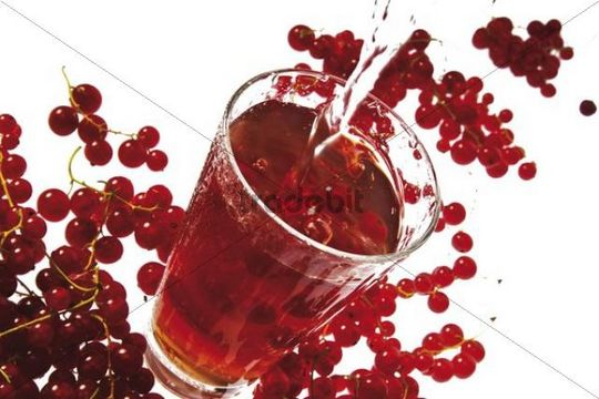 Currant spritzer with red currants Ribes rubrum