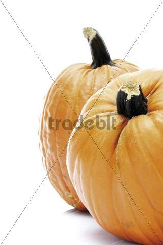 Pumpkins Cucurbita