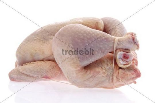 Raw or uncooked chicken