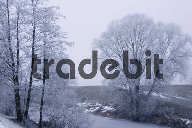 glazed frost hoar frost in fog near Bogen upon the river Danube Lower Bavaria Germany