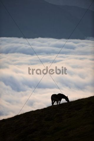 Horse above the clouds on the Col dAubisque, Aquitaine, France, Europe