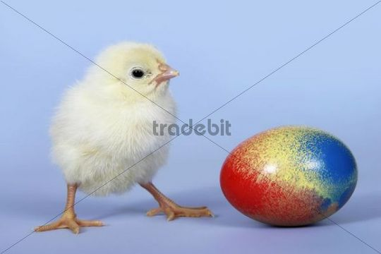 Chick and Easter egg