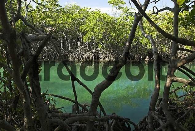 Gilligans island, Puerto Rico