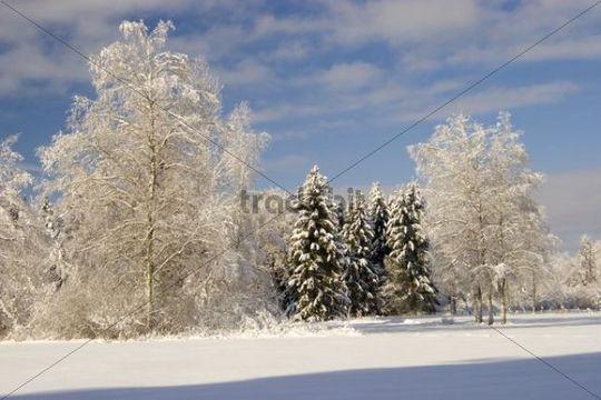 Winter landscape scenery, trees, Bavaria, Germany, Europe