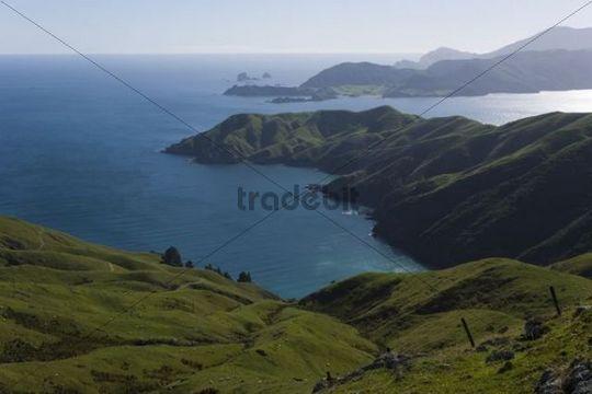 Hilly green landscape in Marlborough Sounds, Okuri Bay, Marlborough, South Island, New Zealand