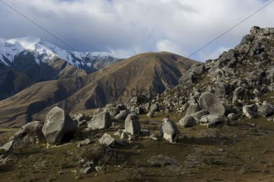 Breath-taking grey rock landscape, Castle Hill Village, Arthur Pass, Canterbury, South Island, New Zealand