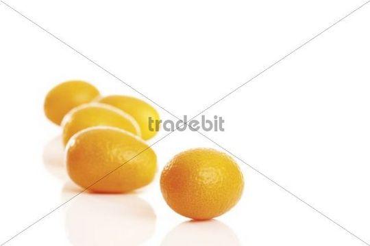 Kumquats or Cumquats Fortunella, citrus fruit