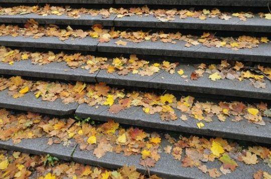 Autumnal leaves on steps