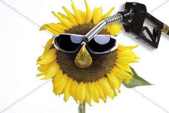 Sunflower, petrol pump, symbolic of biofuels