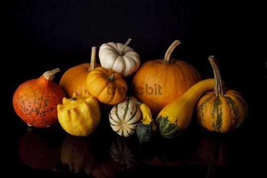 Still life with cucurbita pepo and edible pumpkins on black background