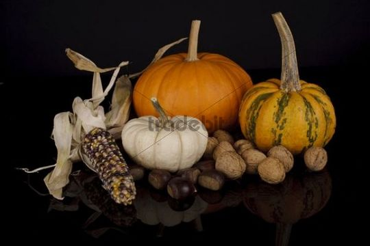 Still life with cucurbita pepo, edible pumpkins, maize and nuts on black background