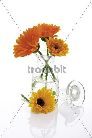 Marigolds Calendula in an apothecary bottle