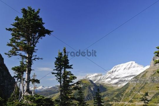 Free space for text, Logan Pass, main attraction of Glacier National Park, Montana, USA, North America