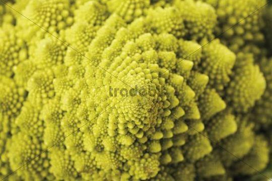 Romanesco broccoli, closeup