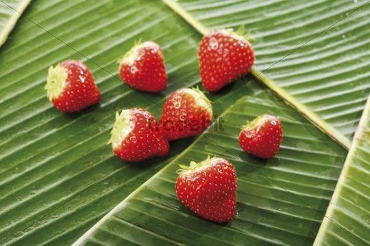 Strawberries on banana leaves