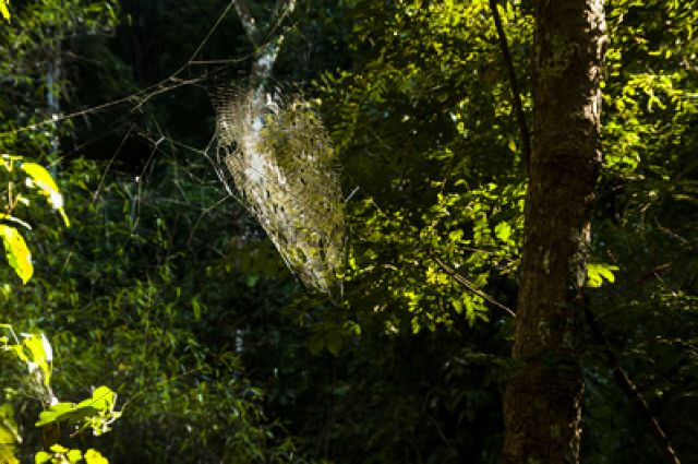 Cobweb in a forest against the light, Northern Thailand, Thailand, Asia