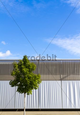 Solitary tree in front of an industrial building, Berlin, Germany, Europe /