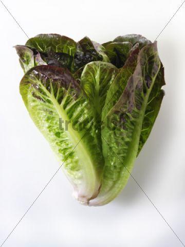 fresh mini cos lettuce download nature. Black Bedroom Furniture Sets. Home Design Ideas