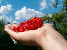 Thumbnail  ** Organic Gardening ** A Beginners Guide
