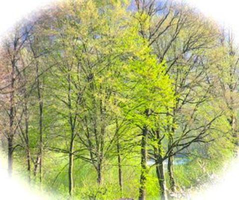 Pay for Der Baum - Phantasiereise